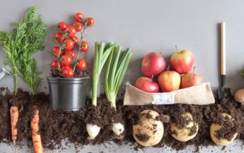 Hur du kan göra kompost om du bor i en lägenhet