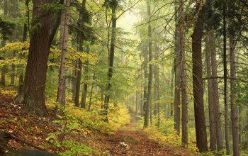 10 skäl till varför skogar är viktiga