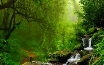 19 intressanta saker om regnskogar
